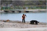 """Пока что пляж """"Омега"""" — это кучи мусора, водорослей и бродячие собаки"""